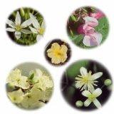 Bach Flower Remedies レスキューレメディ 10ml
